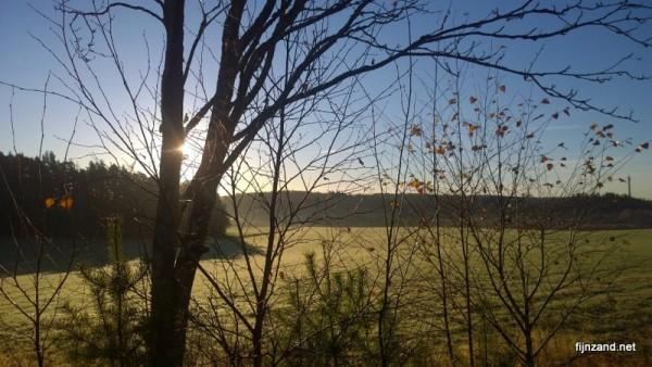 Aurinko puun takaa